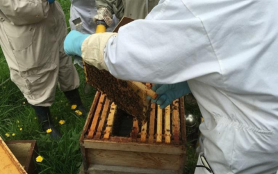 A beginner's guide to beekeeping